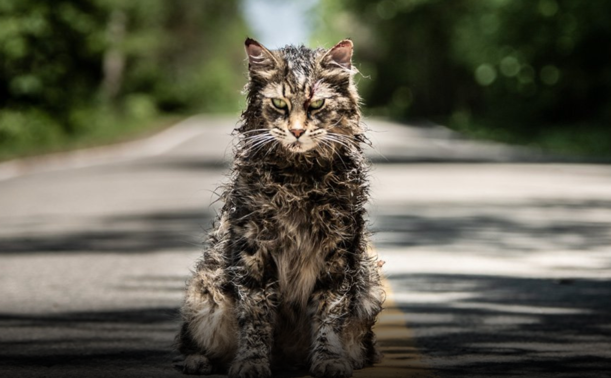 undead kitty pet sematary