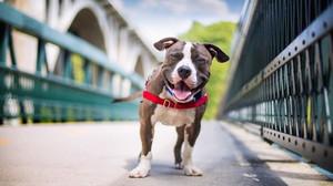 Έλα να ρίξεις μια ματιά στους ομορφότερους σκύλους του κόσμου