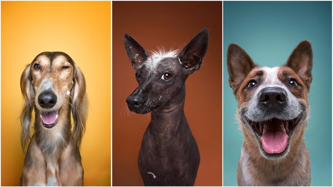 Οι ανθρώπινες εκφράσεις των σκύλων που μας έφτιαξαν τη μέρα