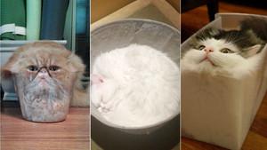 Υπάρχει κανείς που να διαφωνεί ότι οι γάτες χωράνε παντού;