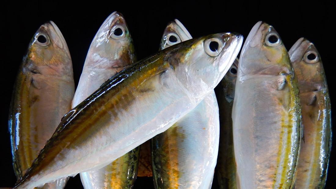 Τα ψάρια