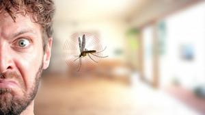10 πραγματάκια που σου ψιθυρίζουν τα Κουνούπια όταν περνούν δίπλα από το αυτάκι σου