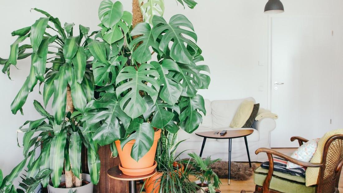 Τρεις τρόποι για να κάνεις «αποτοξίνωση» στον χώρο σου