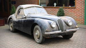 Ώριμη Jaguar, μόνη, ψάχνει οδηγό για συντροφιά