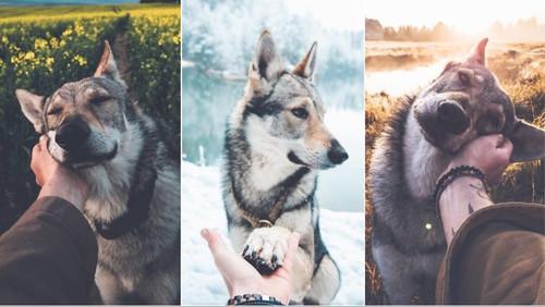 To #FollowMeTo του Instagram τώρα και σε σκύλο