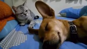 Φαγωθήκαν σαν το σκύλο με τη γάτα