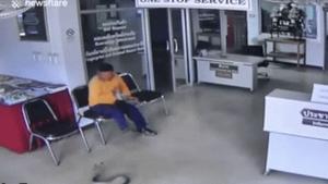 Τεράστιος μάγκας: Του επιτέθηκε φίδι σε… αστυνομικό τμήμα και του άλλαξε τα φώτα!