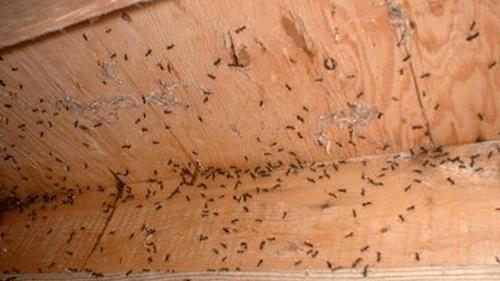 Όταν τα μυρμήγκια κάνουν κατάληψη σε ΚΑΘΕ σπιθαμή του σπιτιού σου