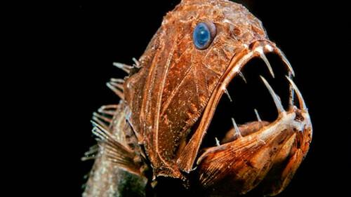 Τα πιο τρομακτικά ψάρια που υπάρχουν!
