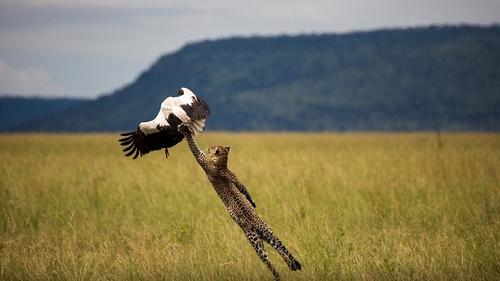 Όταν το National Geographic σε αφήνει με το στόμα ανοιχτό